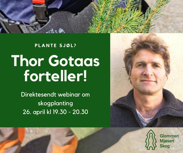 Thor Gotaas holder over hundre foredrag i året og har imponert med sine mange bøker om skihistorie og som folkeminnegransker. Men ved siden av forfatterskapet planter han hvert eneste år 40.000 planter!
